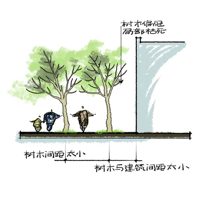 园林景观之乔木种植技术