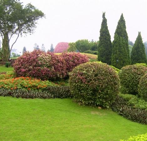 植物配置实景图片